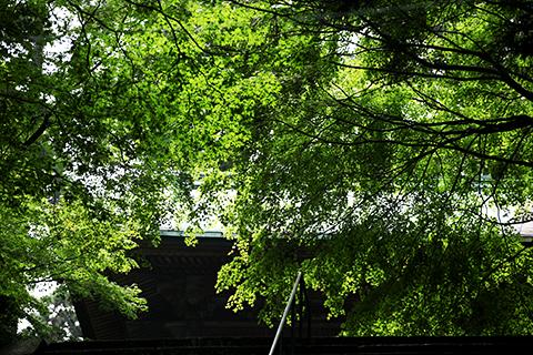 比叡山の綺麗な緑
