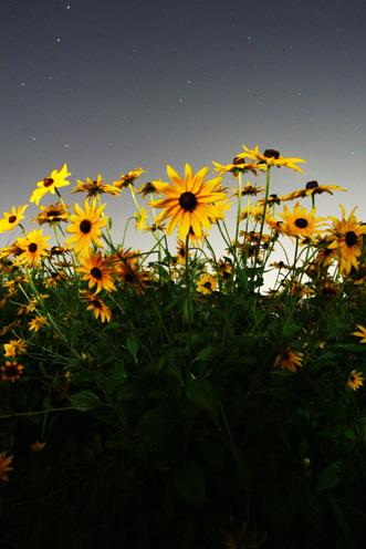 夜の花,写真