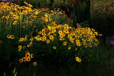 群生する花,写真
