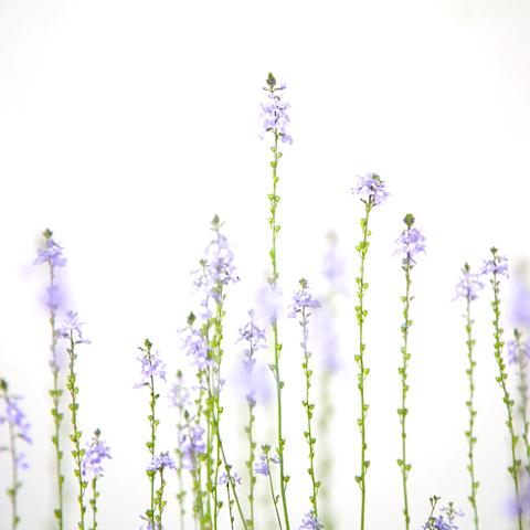 せいくらべをする花たち 写真