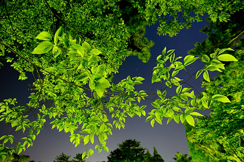 夜の緑 写真