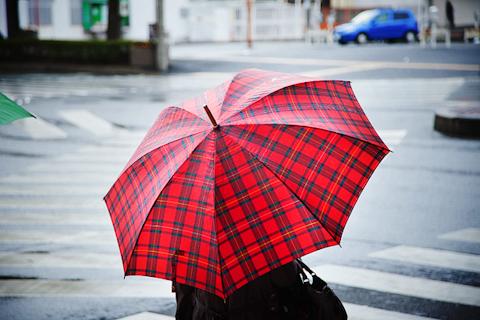 梅雨、傘をながめる