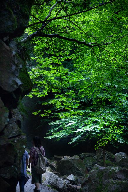緑の回廊 ―赤目の記憶―