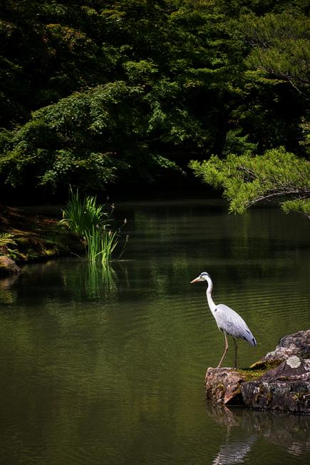 金閣寺と鳥