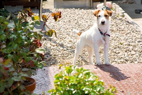 散歩道の犬 写真