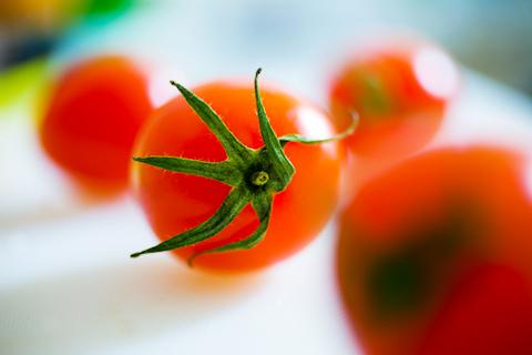 食卓の上のプチトマトたち 写真