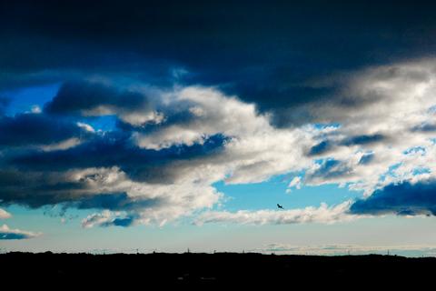 空、鳥のいる風景