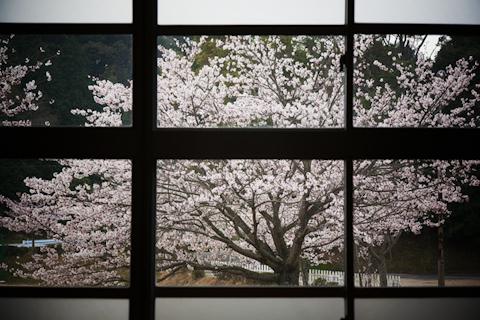 回想 ―窓辺、桜―
