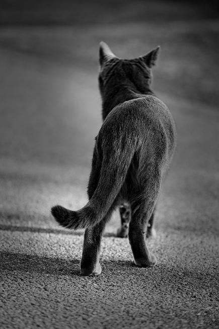 ネコのきまぐれ
