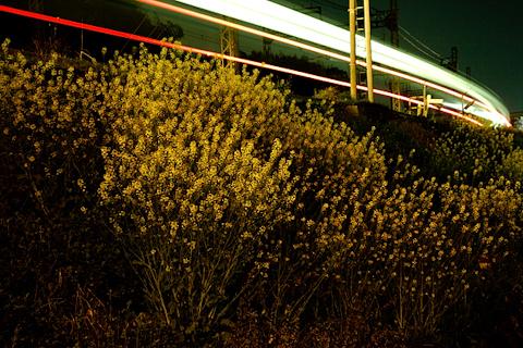 夜の菜のJR沿線 写真