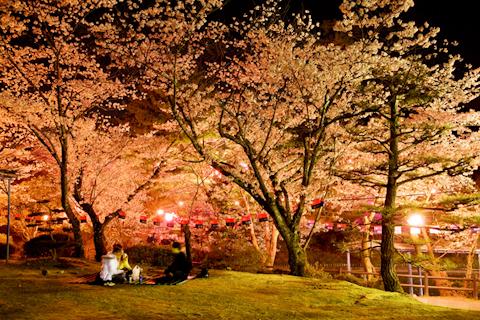 皆楽公園の夜桜 写真