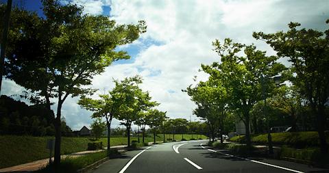 街路樹のある道 写真