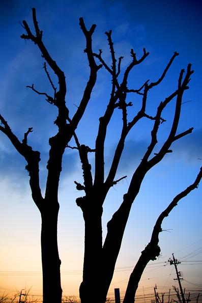 夕焼けの木,シルエット,写真